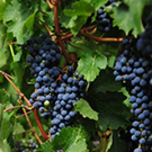 Tour Vino Sicilia