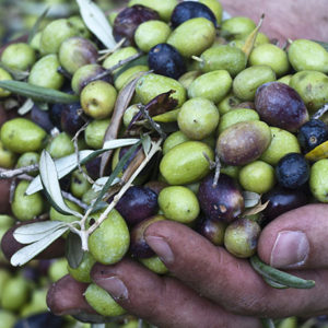 Huile d'olive sicilien