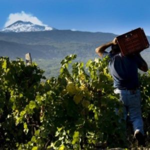 Vignoble de l'Etna