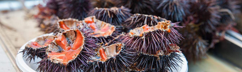 Piscaria : Mercato del Pesce Catania