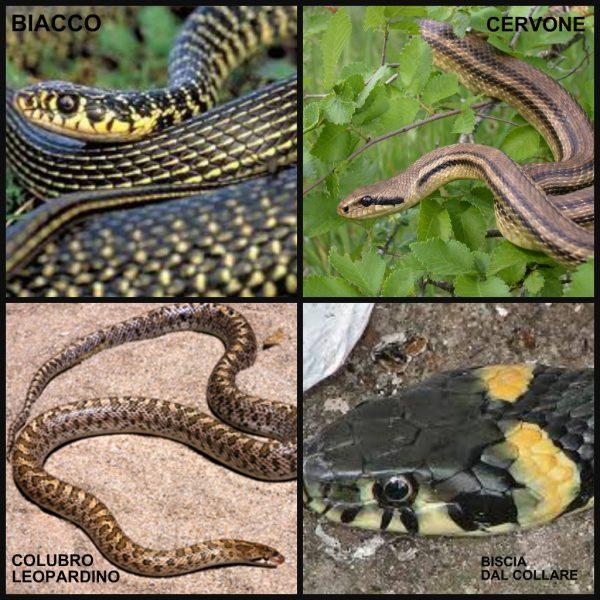 serpents d'Etna2