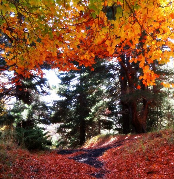 etna feuilles rouges2